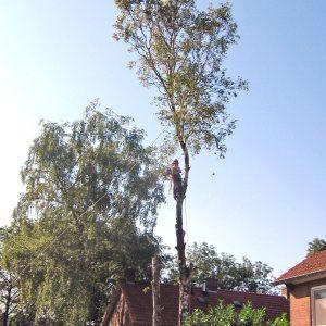 Omzagen boom