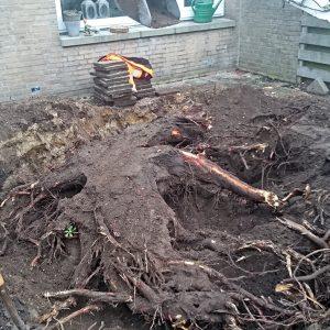Uitgraven boomwortels
